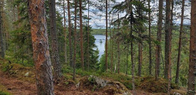 Metsän kannustava tuki ja turva (hallituksen palsta 9/2020)